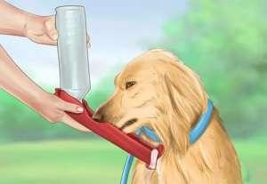 如何预防狗狗中暑?
